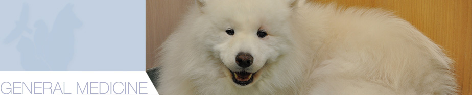 Adult Dog Care in Winter Park Florida