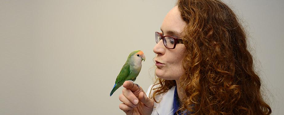 Bird Veterinarian in Winter Park FL