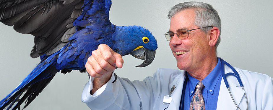 Bird Veterinarian in Winter Park FL