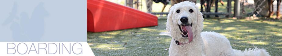 Dog Boarding in Winter Park FL