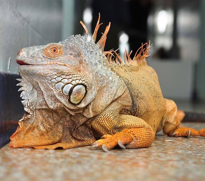 Bird Reptile Exotic Pet Boarding In Winter Park Orlando