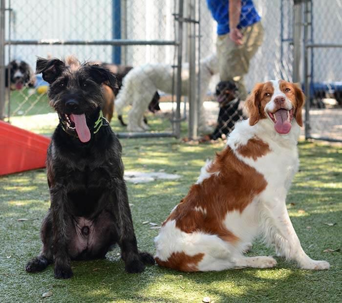 Doggie Day Care in Winter Park FL