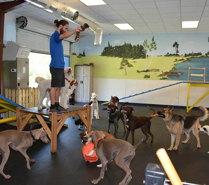 Doggie Day Care in Winter Park FL