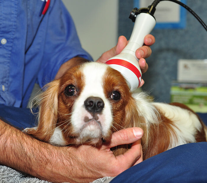 Veterinary Laser Therapy in Winter Park FL