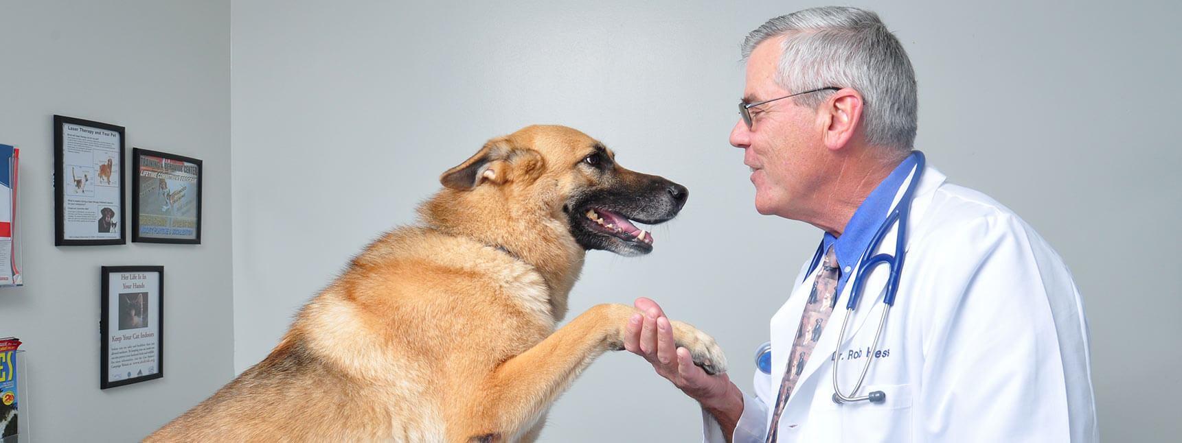 Dog Veterianrian in Winter Park Veterinary Hospital