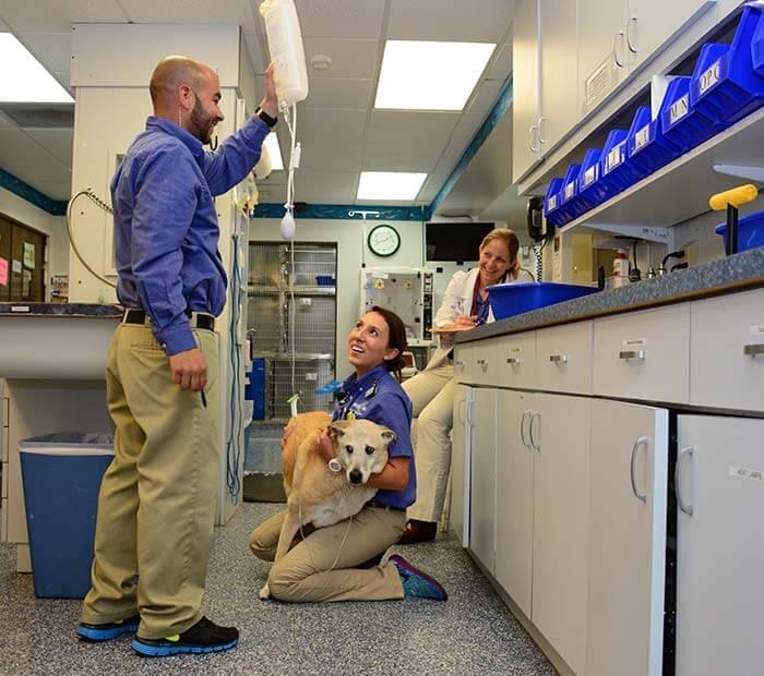 Winter Park Veterinary hospital