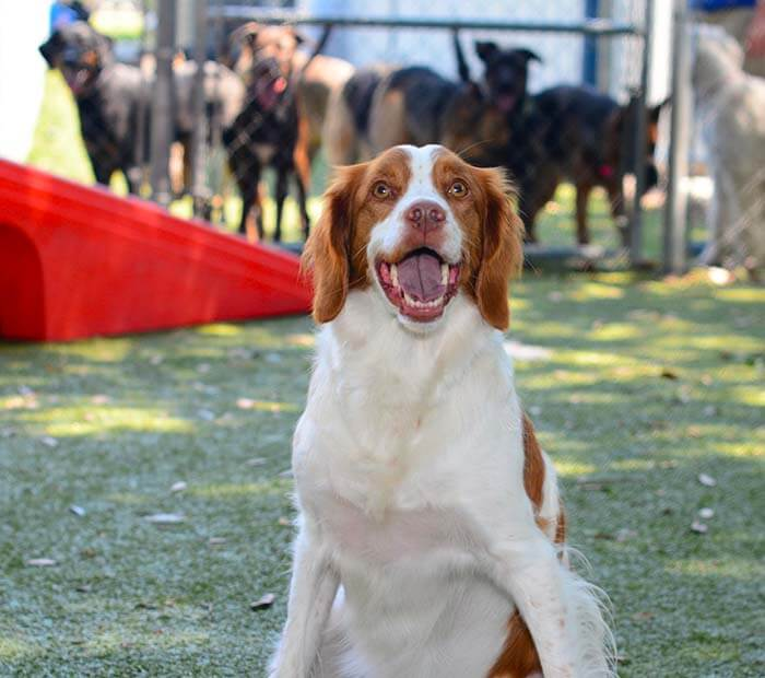 Dog boarding Winter Park Florida
