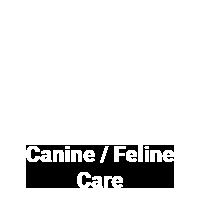 canine-feline-veterinary-care-2