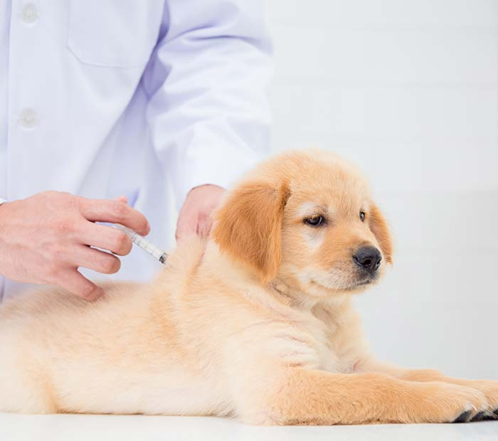 dog-vaccinations