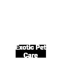 exotic-avian-veterinary-care-2