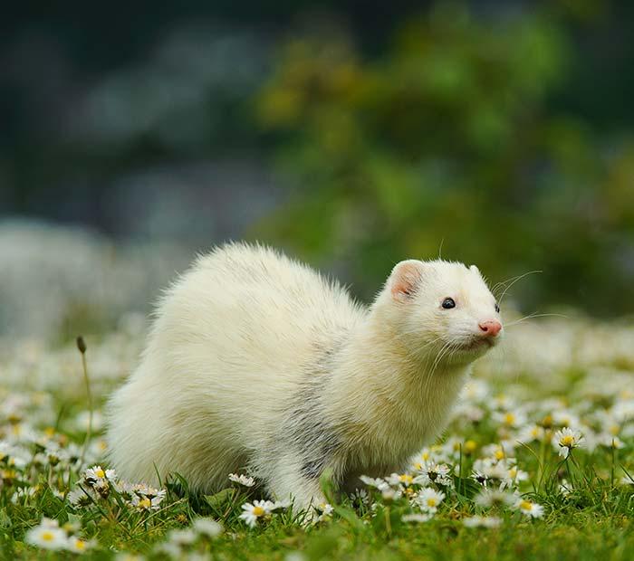 exotic-pet-1Small Mammals