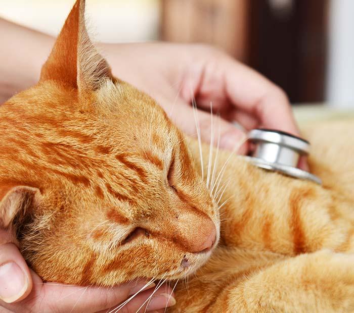 feline-veterinarian-orlando-florida