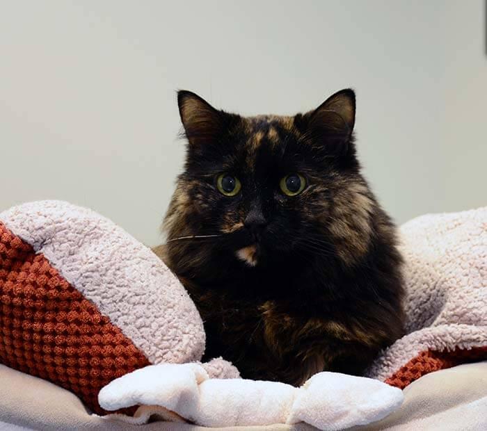 Feline Wellness Care at Winter Park Veterinary Hospital