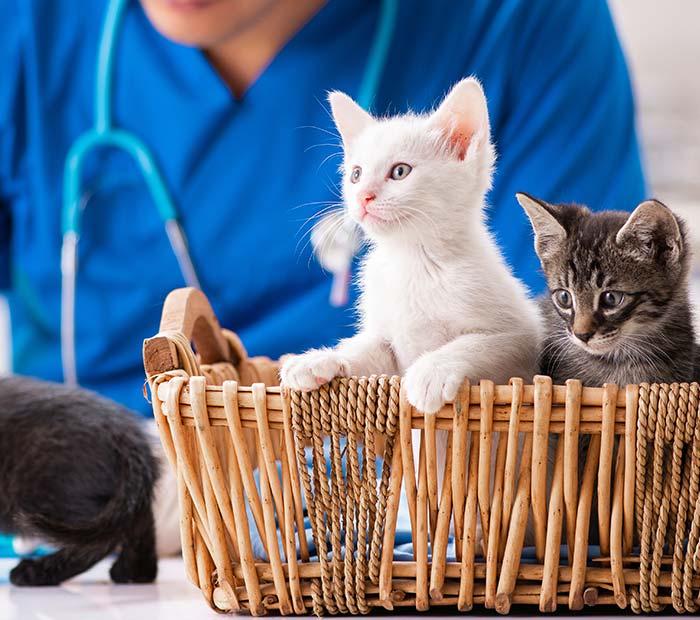 kitten-veterinary-care