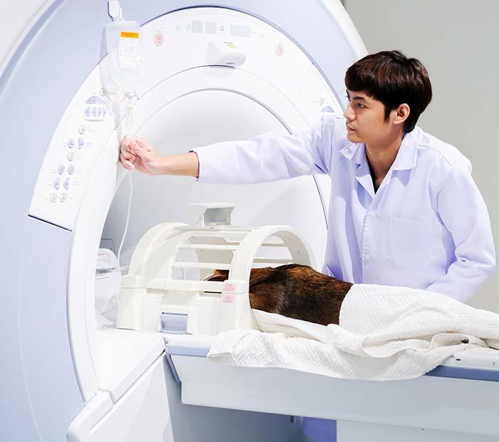 veterinary-ct-scan