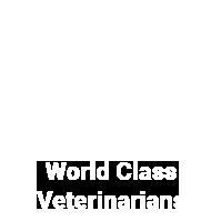 world-class-veterinarians-2
