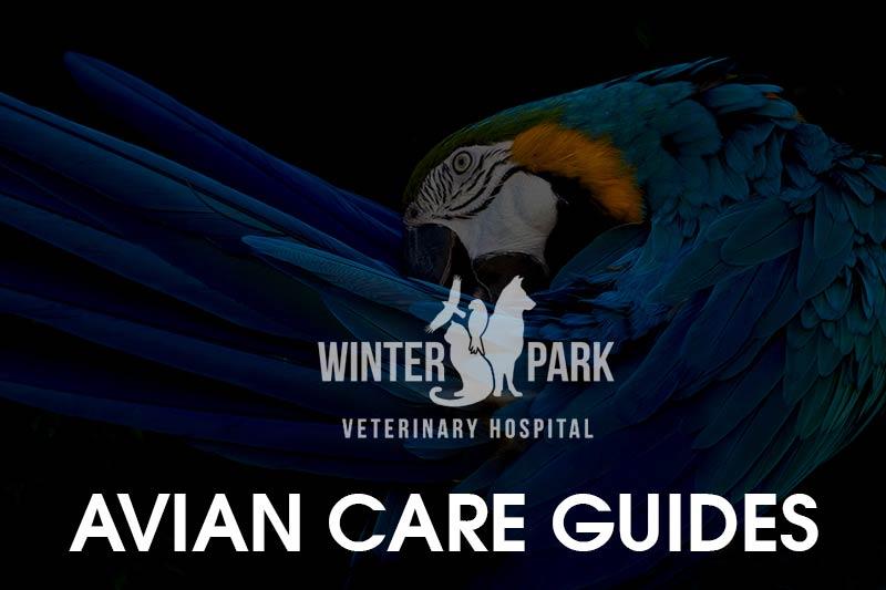 bird-pet-care-guide