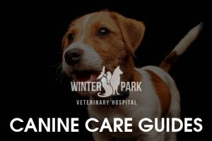 canine-pet-care-guide