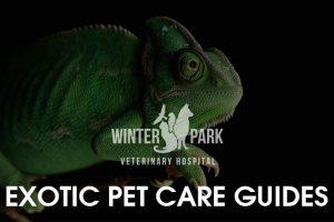 exotic-pet-care-guides