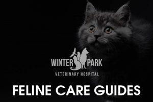 feline-pet-care-guide