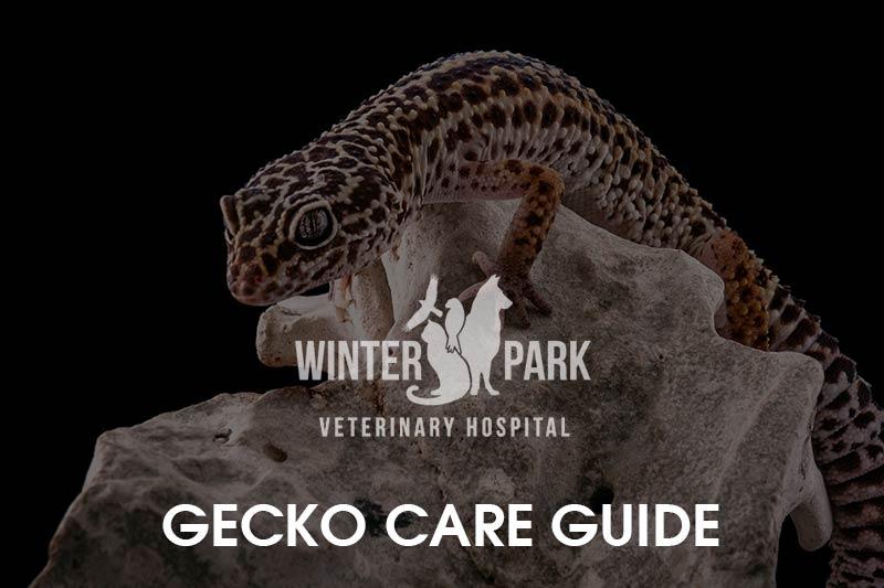 gecko-care-guide