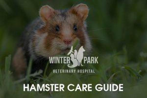 hamster Care Guide