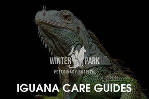 iguana-care-guides