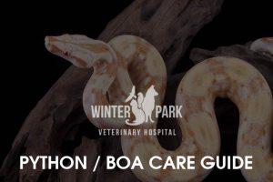 python-boa-care-guide