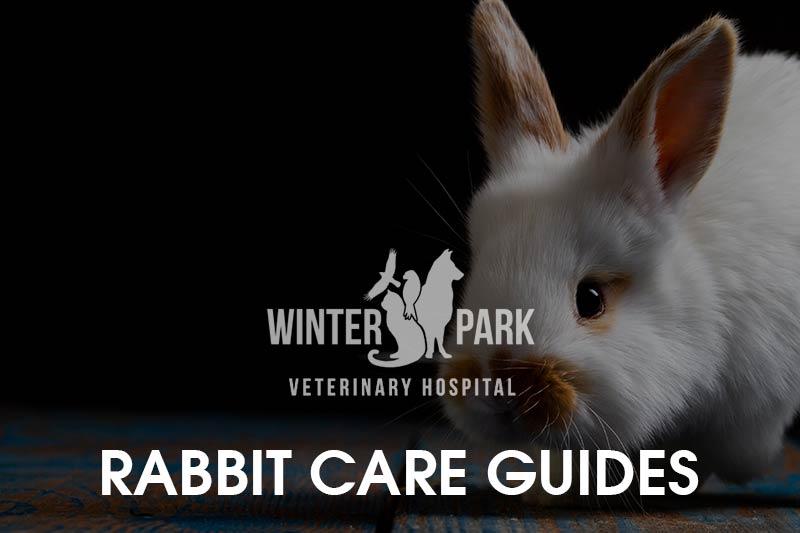 rabbit-care-guides