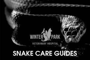 snake Care Guide