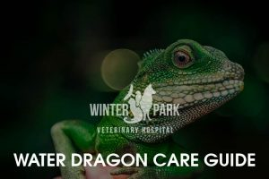 water-dragon Care Guide