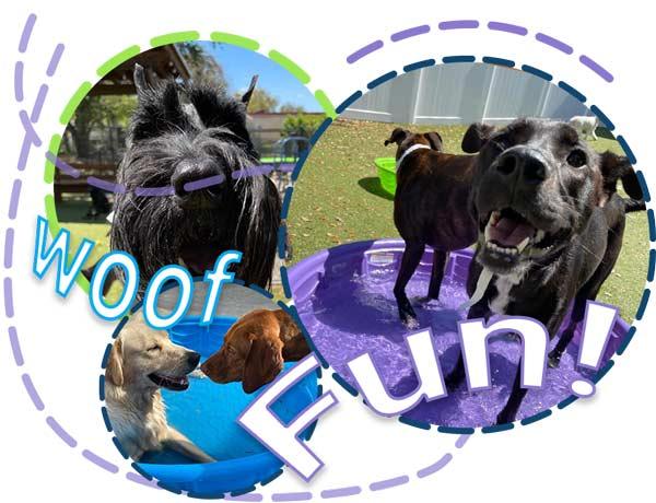 FUN---doggie-daycare-1