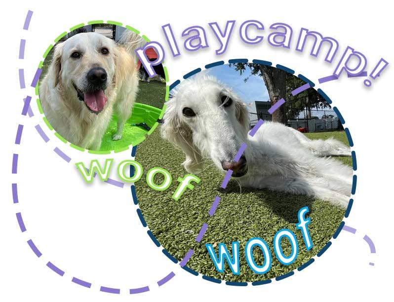 FUN---doggie-daycare-2