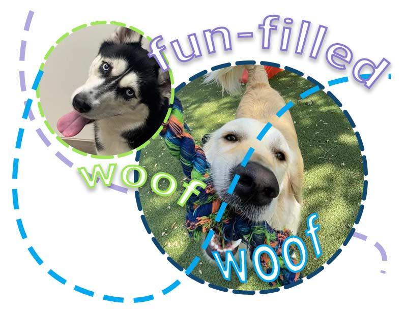 FUN--doggie-daycare-3