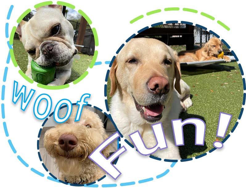 FUN--doggie-daycare-4