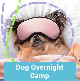 dog-overnight-camp