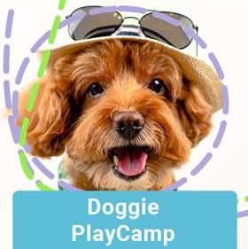 doggie-playcamp
