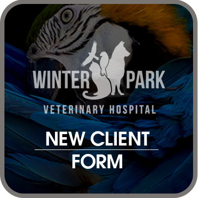 new-client-form-btn