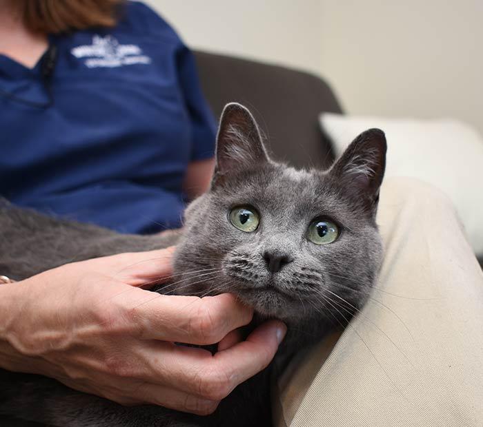Cat-vaccinations-Orlando-fl