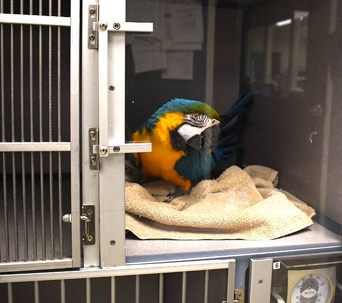 avian-surgery-winter-park-fl